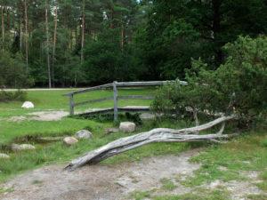 Im Büsenbachtal